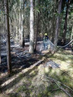 Požár lesa Lásenice